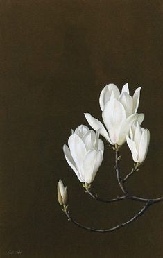 Paul Osborne Jones, Magnolia Denudata 20th century