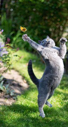ooooohh! I shall catch it! :))
