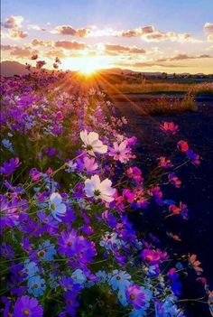 Pretty flowers at sunset