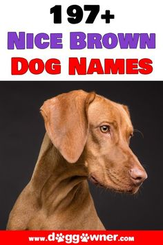 These names were picked specially for all the fantastic dogs with brown coats out there. Here are 200 nice brown dog names. #browndognames #dognames