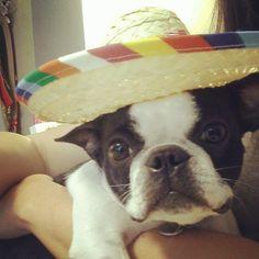 Happy Sunday! Its been cinco de drinko for this perrito borracha.