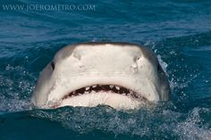 Awesome Shark pic - Peek-a-boo, I see you.