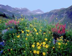 Yankee Boy Basin near Ouray....jeep tour in early summer when all of the Spring flowers are in full bloom!