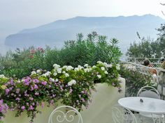 Hotel Aminta Sorrento Sorrento, Plants, Plant, Planets