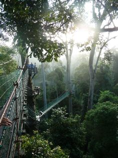 Rainforest Canopy Walkway, Borneo - ecotour... how was I in Borneo and never saw this?! i must go back.
