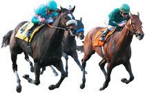 StewVille Logo Horses, Logos, Animals, Animales, Animaux, Logo, Animal, Animais, Horse