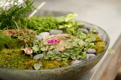 Flecks of burnished metal float through rough-hewn, sea-colored glass, adding Mediterranean appeal to this lovely, low serving bowl- Hand-blown glass- Terrarium Plants, Glass Terrarium, Planting Succulents, Planting Flowers, Indoor Planters, Indoor Gardening, Eclectic Taste, Dish Garden, Love Garden