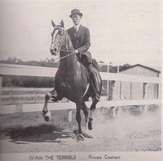 Saddlebred stallion Anacacho Denmark when he was shown under the name Ivan the Terrible.