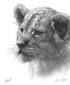 baby lion drawings - LinuxMint Yahoo Image Search Results