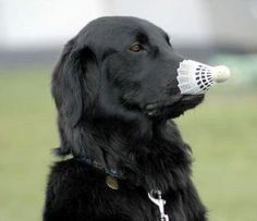 badminton anyone?!