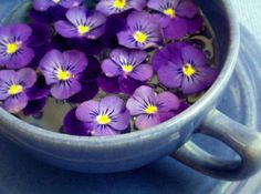 Violets are edible, and plentiful, growing wild all over our neighborhood in late spring. Use as garnish or floating in drinks!