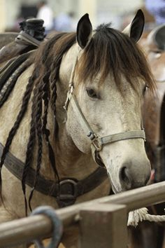 The Facts on EHV-1 – America's Horse Daily. There's a outbreak around our area right now, hope we can avoid it!