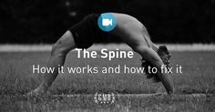 The Spine is a complex structure. Here`s how it works, plus back exercises for flexibility and strength to fix what's ailing you.