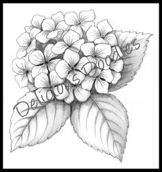 Hydrangea drawing by:  Deliciousdoodles.blogspot.com