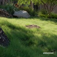 "UC Verde buffalograss: ""Developed by UC Davis and UC Riverside and is specially adapted to suit the conditions in California. Once established, you will see up to a 75% reduction in water consumption due to its deep root system which reaches several feet into the ground."""