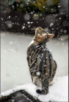 Cats and kittens are so funny and cute animals, they are simply the best! Just look how all these cats & kittens play, fail, get along with dogs, get their Animals And Pets, Baby Animals, Funny Animals, Cute Animals, Animals Images, Animal Memes, Animals In Snow, Funniest Animals, Animal Babies
