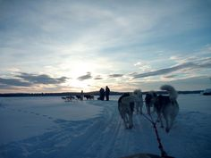 Sled at Nellim - Finland / Lapland ~ amazing day!