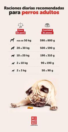 9 Ideas De Kiara Consejos Para Mascotas Lenguaje De Los Perros Comida Para Perros