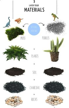 to make a Terrarium in 4 steps … The size of your container will affect th. How to make a Terrarium in 4 steps … The size of your container will affect th. How to make a Terrarium in 4 steps … The size of your container will affect th. Garden Care, Planting Succulents, Planting Flowers, Mini Plantas, Terrarium Plants, Terrarium Ideas, Succulent Terrarium Diy, Wall Terrarium, Terrarium Scene