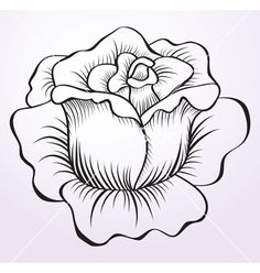 Rose Drawings | Rose drawing vector 584065 - by MarishaJ
