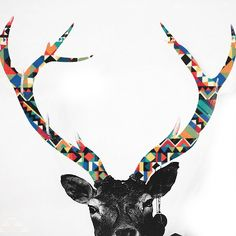 antlers, you could blow this picture up and then print it off and it would be an awesome wall art for your living room!