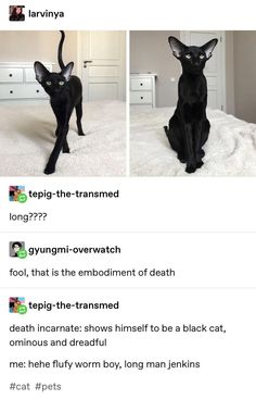 Long graceful death kitty baby baby boy - Funny Baby - Long graceful death kitty baby baby boy The post Long graceful death kitty baby baby boy appeared first on Gag Dad. Cute Funny Animals, Funny Cute, Cute Cats, Hilarious, Adorable Kittens, Funny Animal Humor, Pretty Cats, Beautiful Cats, Meme Chat