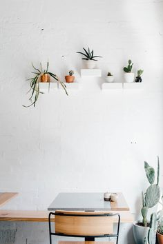 Cacti Decoration | Alexandra Strong