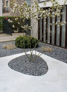 Concrete and gravel pattern- gravel garden to surround deck/tiki area.  Modern and easy to do
