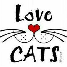 Para Joyce Loucks y Marcia Brenneman - CatArt - Gatos Crazy Cat Lady, Crazy Cats, I Love Cats, Cool Cats, Gatos Cats, Cat Quotes, Cat Sayings, Work Quotes, Here Kitty Kitty