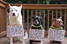 Tip # 292  www.peaceandpaws.org Paws Rescue, Great Love, Dog Friends, Dog Treats, Twinkle Twinkle, Make Me Smile, Funny Animals, Your Dog, Labrador Retriever