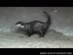 They're fantastic dancers. | 23 GIFs Of Otters That Will Make You Wish You Could Have One For A Pet