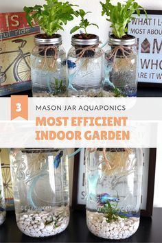 Aquaponics System - Hydroponics saves more water than soil gardening. I grow herbs and salad with mason jar aquaponics system. My betta fish are happy and active in their systems. Indoor herb garden/ salad garden/ organic garden all in one. Indoor Vegetable Gardening, Organic Gardening Tips, Hydroponic Gardening, Container Gardening, Aquaponics Greenhouse, Aquaponics Plants, Indoor Hydroponics, Urban Gardening, Gardening Blogs