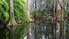 HDQ Images swamp wallpaper, 1920x1080 (870 kB)