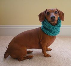 Hey, I found this really awesome Etsy listing at http://www.etsy.com/listing/119299274/dog-neck-warmer-knit-cowl-pdf-pattern