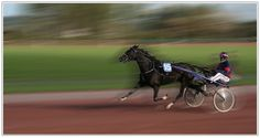 Black Horse by Jean-Claude /Flickr photo. The movement & speed well caught in the shot.