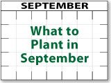 What to Plant in September!! (this site also covers what to plant every other month of the year too!)