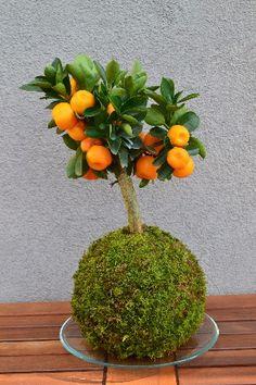 Kokedama - Idee Green