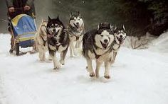 Sled dogs, i don't like cold/snow but i'd do this