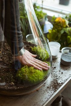 5 Inspiring (& Easy!) DIY Indoor Gardens #refinery29 http://www.refinery29.com/urban-gardening#slide8 Step 5: Start adding your plants and live moss.