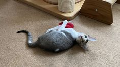 Mactavish: Yes Human? How May I be of Purrsistance? Hi everyone, Its me wee little Mactavish again here today. 😀 If you have come to ask for my purrsistance… I am a little busy right now. 😉 Because well you see… Today I got my paws on one of the 4cats heart cat toys. 😀 This particular one is made of a soft material […] #Cat, #Cats, #Cute, #Funny, #Katze, #Katzen, #Katzenworld, #Kawaii, #Pets, #ねこ, #猫 #ProductReviews, #Toys