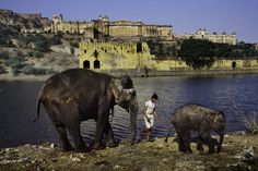 Rajasthan, India :: Steve McCurry