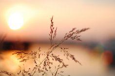 sunset bokeh | Flickr - Photo Sharing!