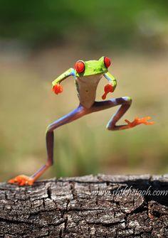 funny-dancing-reptiles-shikhei-goh-2