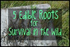 Nature has a way of providing everything we need in the plants around us, including these 5 edible roots that will help you survive in the wild.