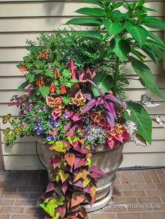 #Sunset #colors are my favorite to design with in #container #gardens.