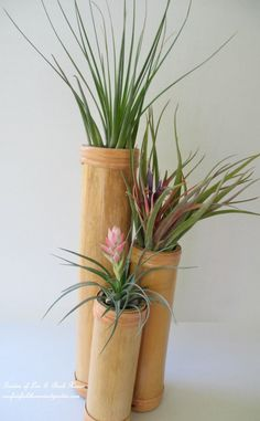 Bamboo vase ~ Get Creative with Air Plants! http://ourfairfieldhomeandgarden.com/air-plant-palette/