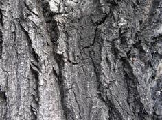 текстура древесины серую