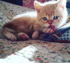 "7,357 Me gusta, 15 comentarios - ⚜Cats Lovers⚜ (@cat_my_boss) en Instagram: ""📸 by @sabotag85 ••• Cute😻💛 --- #catmyboss #cat #cats #catsofinstagram #instacat #instagramanet…"""
