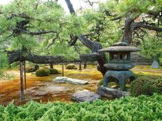 A stone lantern. The garden of Nijo-jo castle. Kyoto city. #stonelantern #garden #japanesegarden #kyoto #kyotogram #kyotolove #pinetree