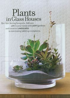 """Succulents In Glass Houses: """"Bye-bye boring bouquets. Add new life to your room with leafy gardens and creative landscapes in interesting tabletop containers."""" Grey Sand & Vase, JamaliGarden.com."""